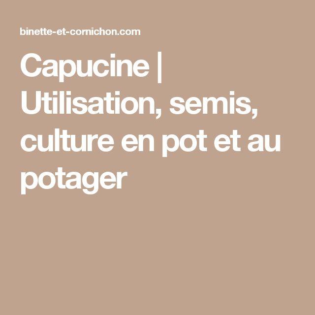 Capucine | Utilisation, semis, culture en pot et au potager