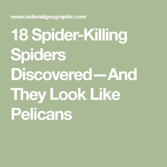 18 Spider-Killing Spiders Discovered—And They Look Like Pelicans