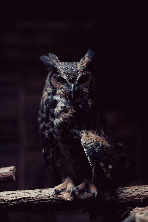owl                                                                                                                                                                                 Mehr