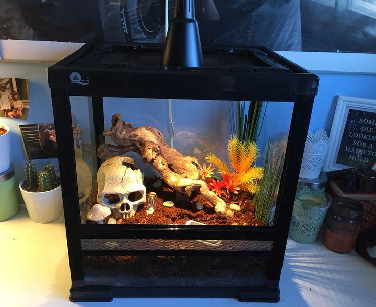 My tarantula enclosure for my Chaco Golden Knee Tarantula, Lucifer ✨. (The front…