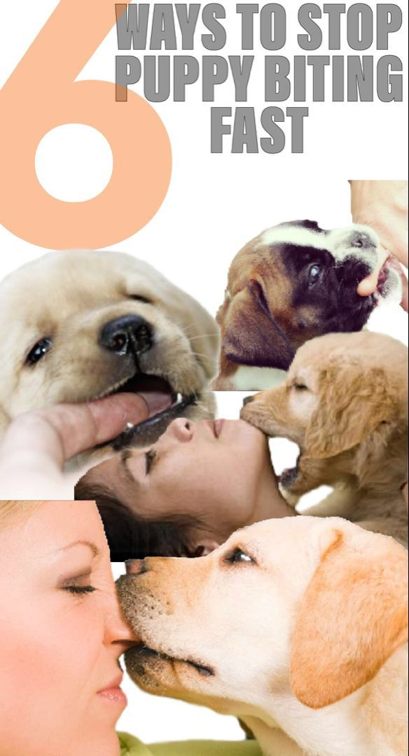 Dog Training 101 How To Train Your Dog Puppy Biting Stop