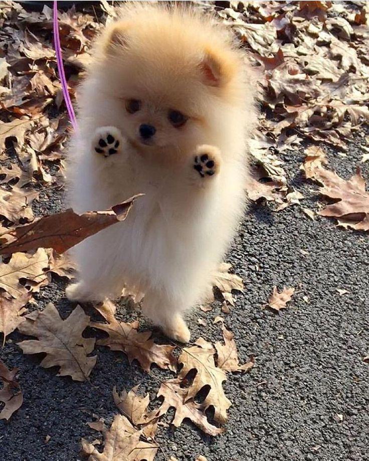 Cute little fur ball