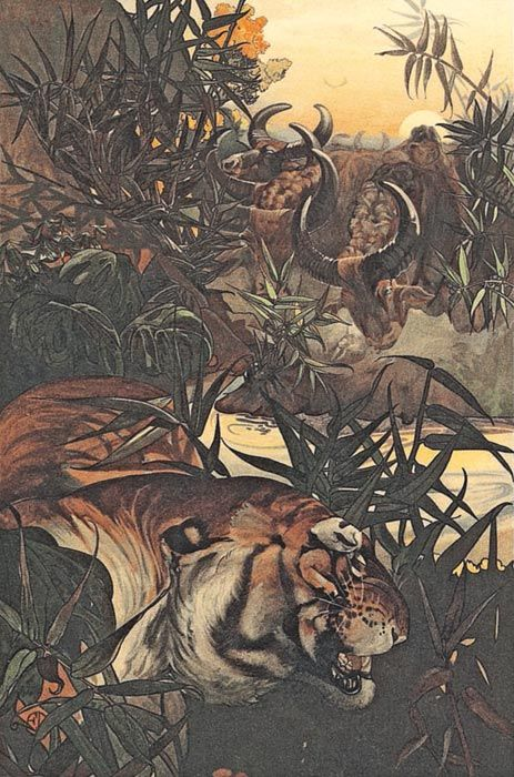 Shere Khan of Rudyard Kipling's The Jungle Book-- illustration by Maurice and Edward J. Detmold. The language of the book is just beautiful.