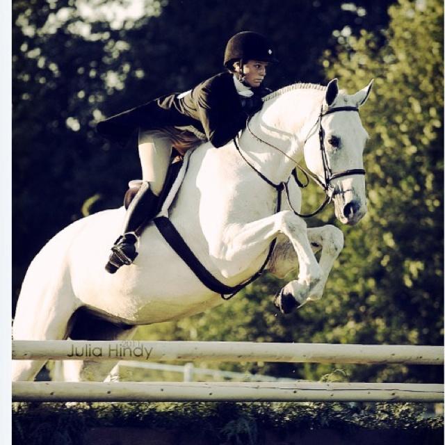 Equitation--Beautiful shot of a hunter/jumper horse