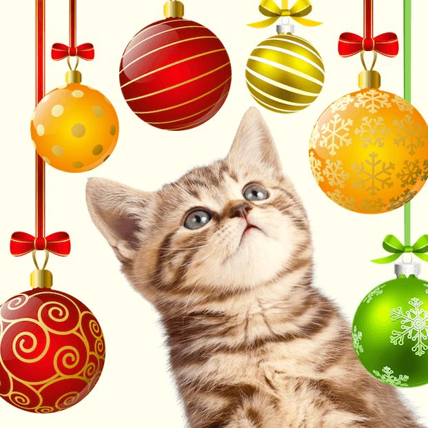 Věšíme vánoční koule