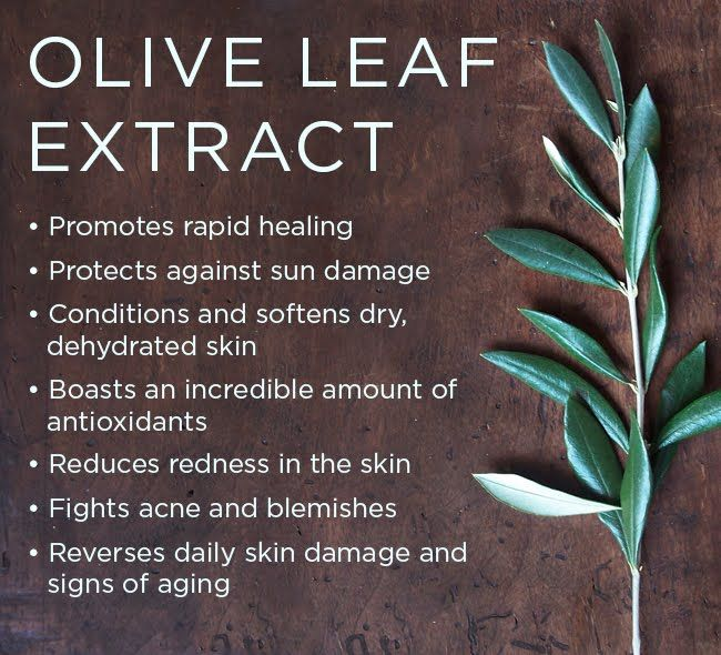 It's time for the letter O in our Osmosis ABC's journey! Learn about incredible benefits of Olive Leaf Extract in our blog!