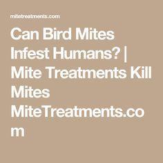 Natural Way To Kill Mites On Humans
