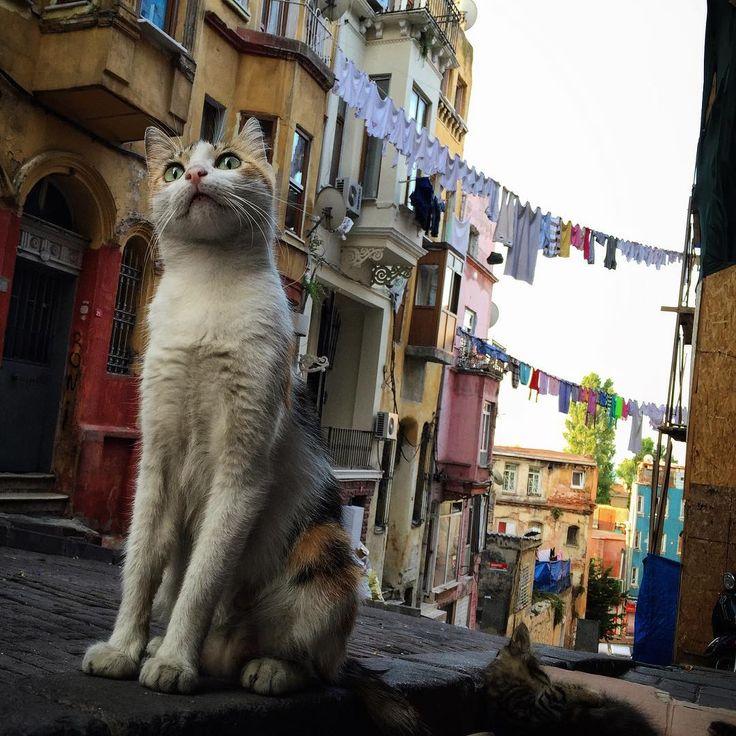 ✿ ❤ Kadırga'nın kedisi :)) Kadırga-İstanbul... By  revolutionship