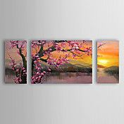 Hand Painted Oil Painting Floral Plum Flowers... – EUR € 66.82