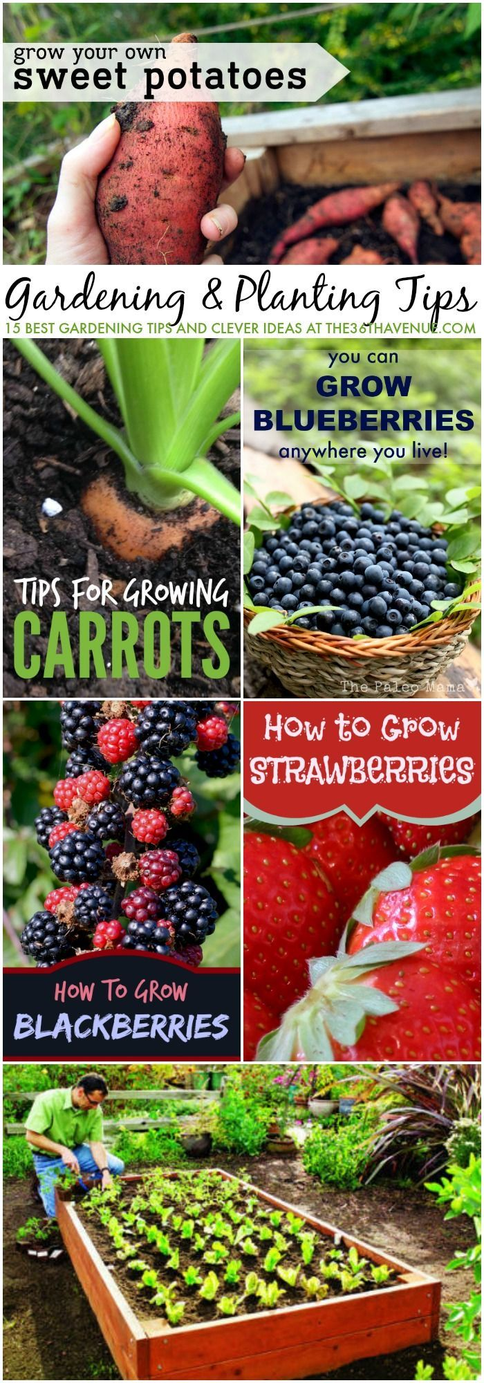 Wow! I am so excited about these great gardening tips and clever ideas. I can't wait to get my garden started, fantastic tips!