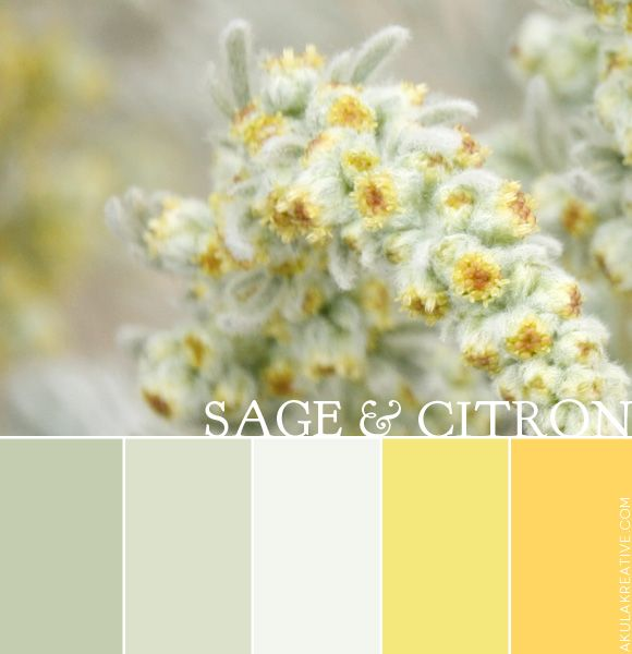 a sage and citron color palette
