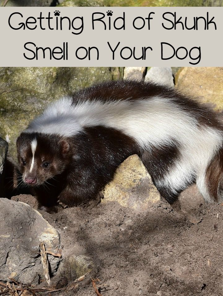 173 best for the pets dog or cat images on pinterest pet
