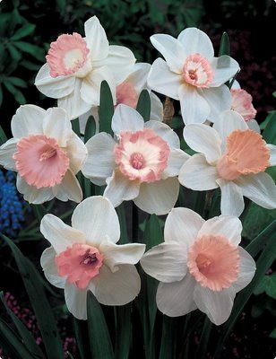 """Modern Day Floral Blog: BIRTH FLOWER OF THE MONTH: March...""""The Daffodil"""""""