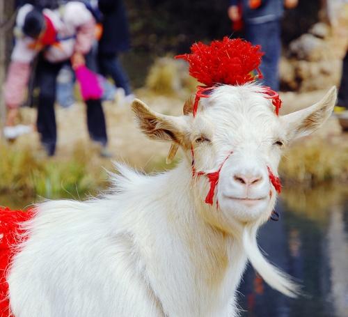 HAPPY          a smiling goat _la chèvre qui rit (by Lingzhi WU)
