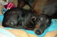 www.Biddingforgood.com  Furever Dachshund Rescue auction  They have great items to bid on or you can give medical treatment.  I did, you can too!