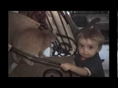 Funny Cat Videos 2014