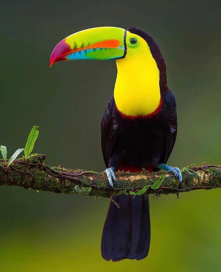 Pin von Priscilla Phua auf pp in 2020   Bunte vögel, Hübsche vögel, Tiere