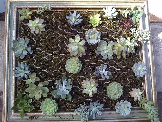 How to make a DIY vertical succulent garden out of a picture frame