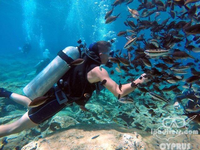 nurkowanie cypr 10