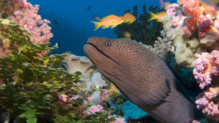 Top 9 – Vietnam-Zwei der schönsten Tauchspots Vietnams finden sich bei Nha Trang. Moray Beach ist für seine Artenvielfalt und seine beeindruckenden, farbenfrohen Korallenformationen bekannt. Mit einer Tiefe von etwa 18 Metern ist das Revier für Taucher aller Könnensstufen geeignet. Madonna Rock ist berühmt für seine vielen Höhlen, die einer Vielzahl von Fischarten Schutz bieten, darunter Riesenmuränen, Rotfeuer- und Skorpionfische.