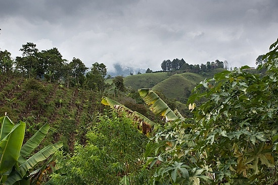 Coffee Farm, Pereira, Colombia