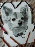 Drawing Chihuahua Ľubomír Frančiak http://portrety-obrazy.sk/ www.facebook.com/portrety.obrazy https://instagram.com/lubomir.franciak/
