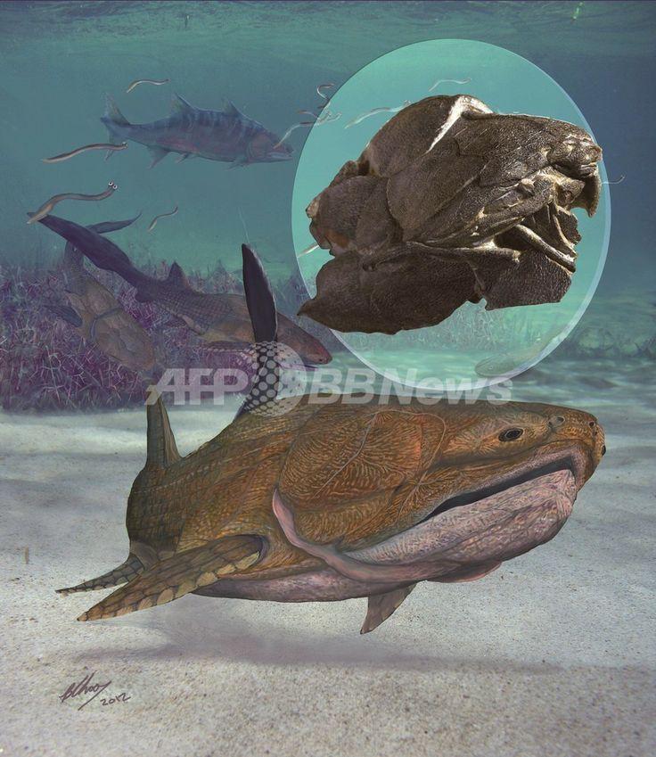 中国で化石が発見された古代魚「Entelognathus primordialis」(2013年9月24日提供)。(c)AFP/NATURE/CHINESE ACADEMY OF SCIENCES/BRIAN CHOO ▼26Sep2013AFP|人類進化の定説覆す魚類化石、中国で発見 http://www.afpbb.com/articles/-/3000185