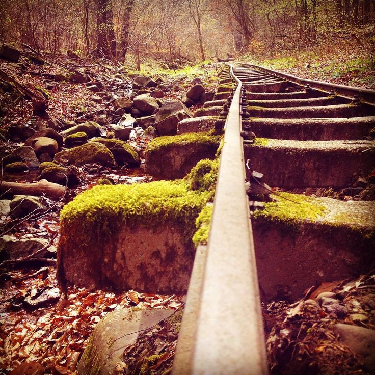 #following #adventurous #trailpath again trough one of #börzsöny 's #forest ❤️🍃🌿👫 #nature #naturetrip #naturerulez #naturelovers #trainpath #hashimoto #hashimotolife #hashimotosdisease #tree #rocks #adaland
