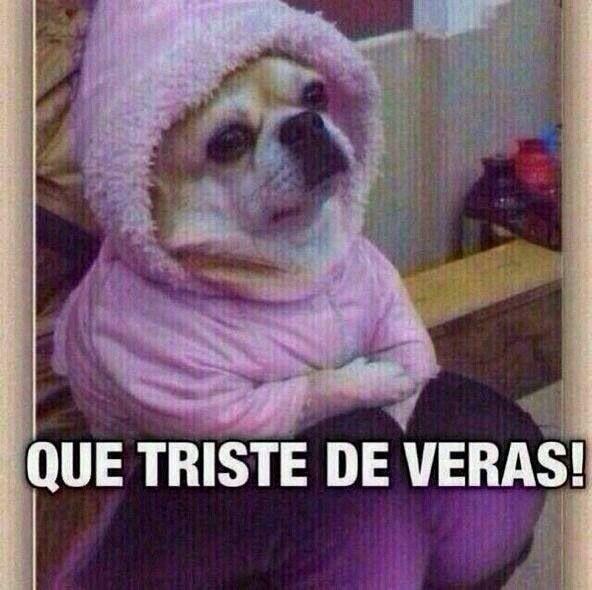 Que triste jaja #meme #perrito | Chiste del día | Pinterest | Meme