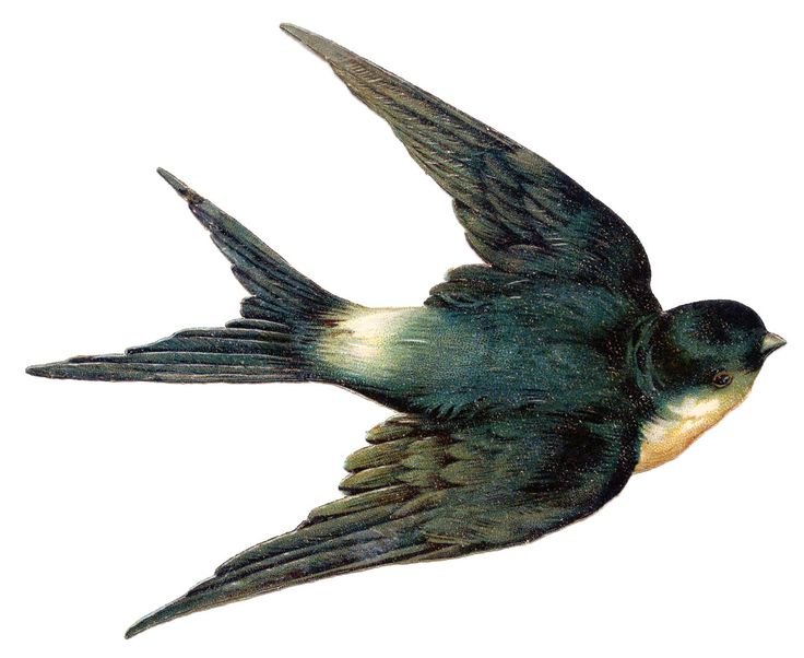 Vintage Clip Art - Bird - Best Swallow Ever! - The Graphics Fairy, great site for clip art