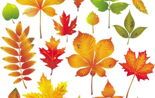 Autumn Leaves Vector 1