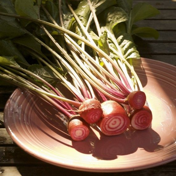 Chioggia Beets  Organic Striped Chioggia Beet Seeds by cubits, $3.75