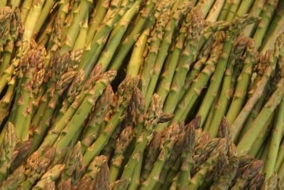 What To Plant Near Asparagus Asparagus Plant Growing 400 x 300