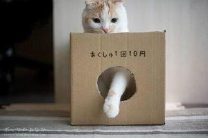 招き猫のご利益を得る7つのポイント - NAVER まとめ