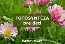 Fotosyntéza pre deti