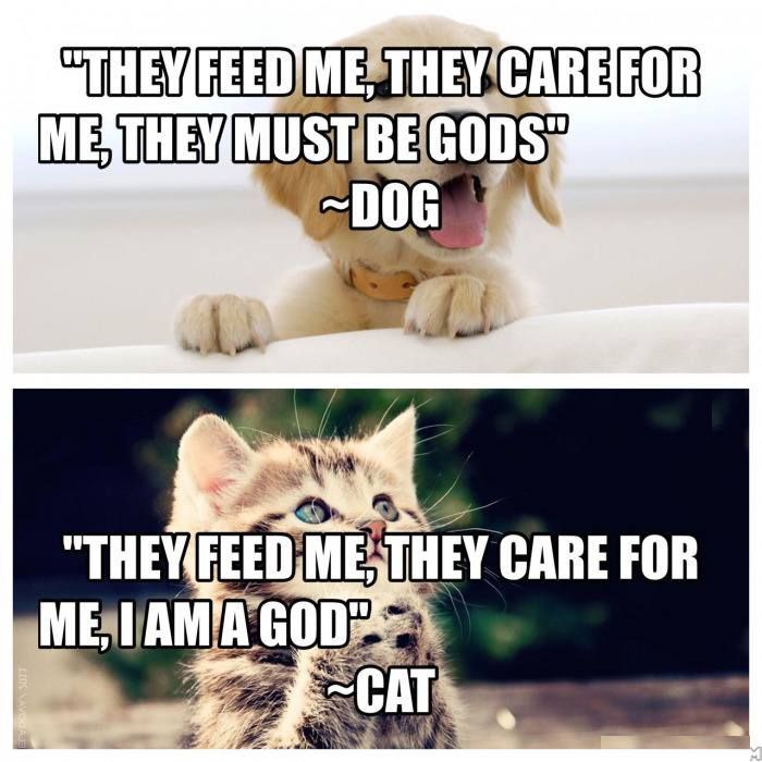 Cats and Dogs!  Do you have pets? Which one?