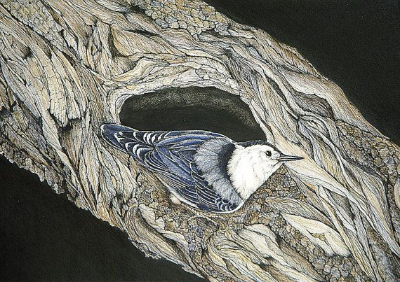 Whitebreasted Nuthatch Blank Greeting Card Set by thenaturalline, $15.00