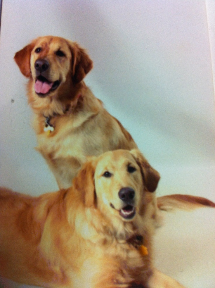 Rocky and Cooper...beautiful dogs!