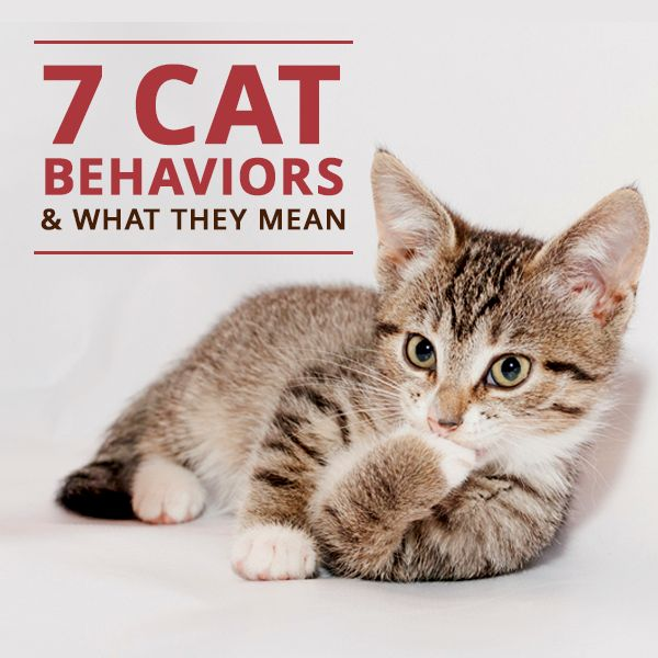 7 Cat Behaviors and What They Mean #cats #catbehavior #pets