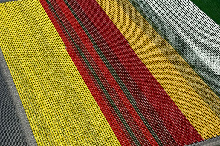 pays bas champs de tulipes colores 101   15 photos dincroyables champs de tulipes colorés   tulipe photo image hollande fleur couleur champ ...