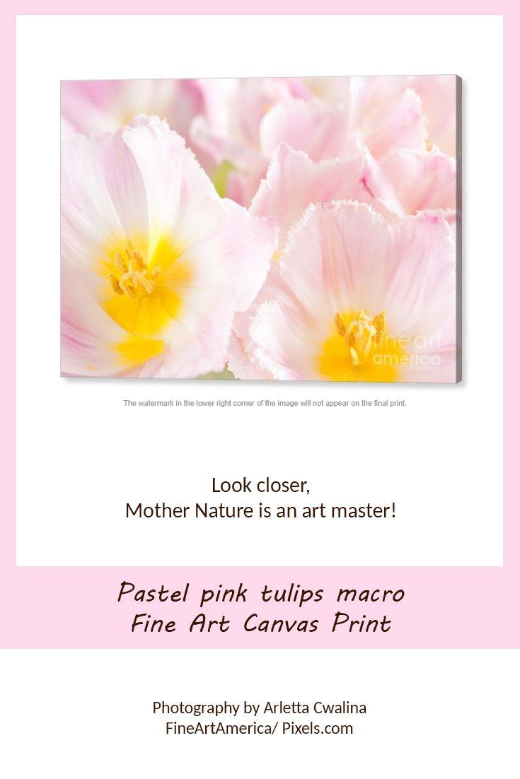 Pastel pink yellow colors tulips macro, fine art picture as canvas print. Mother nature is an art master! Photography by Arletta Cwalina/ fineartamerica. See more clothes and home decor ideas and if you love it, feel free to share, maybe your friends would like to have it too :) #homedecor #canvasprint #tulips