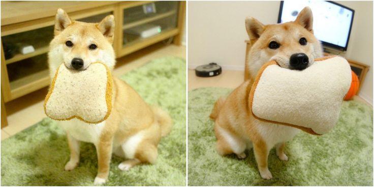 Shiba Inu + Toast Pillow