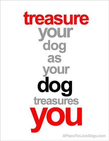 Rover 99 - *Treasure Your Dog | Poster This original poster is available at our new store at Rover99.com