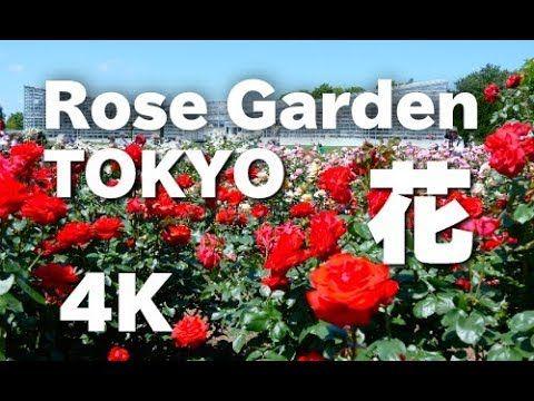 [4K]TOKYO  神代植物公園のバラ  Rose in Jindai Botanical Garden バラの名所 東京観光  Travel