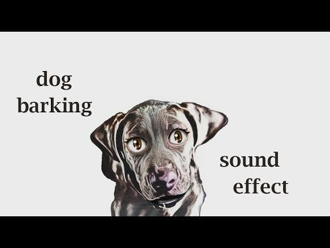 The Animal Sounds: Dog Barking - Sound Effect - Animation