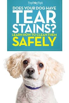 81 best dog care 101 images on pinterest dog care dog owners how to clean dog tear stains video why it matters that you do solutioingenieria Gallery