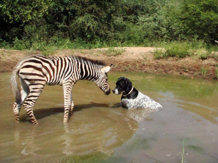 Too sweet! Only in #Africa. Via Zandspruit Estate.