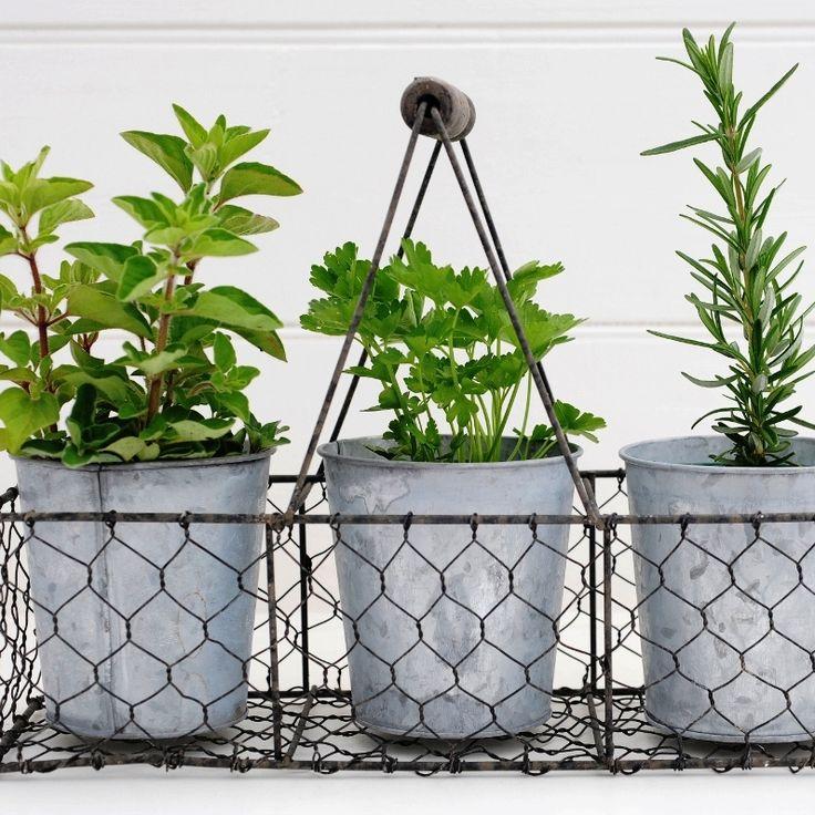 Italian Herb Set $70 hardtofind.com.au