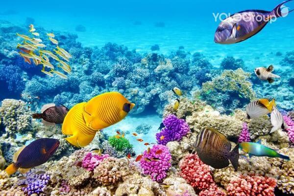 Great Barrier – rạn san hô lớn nhất thế giới