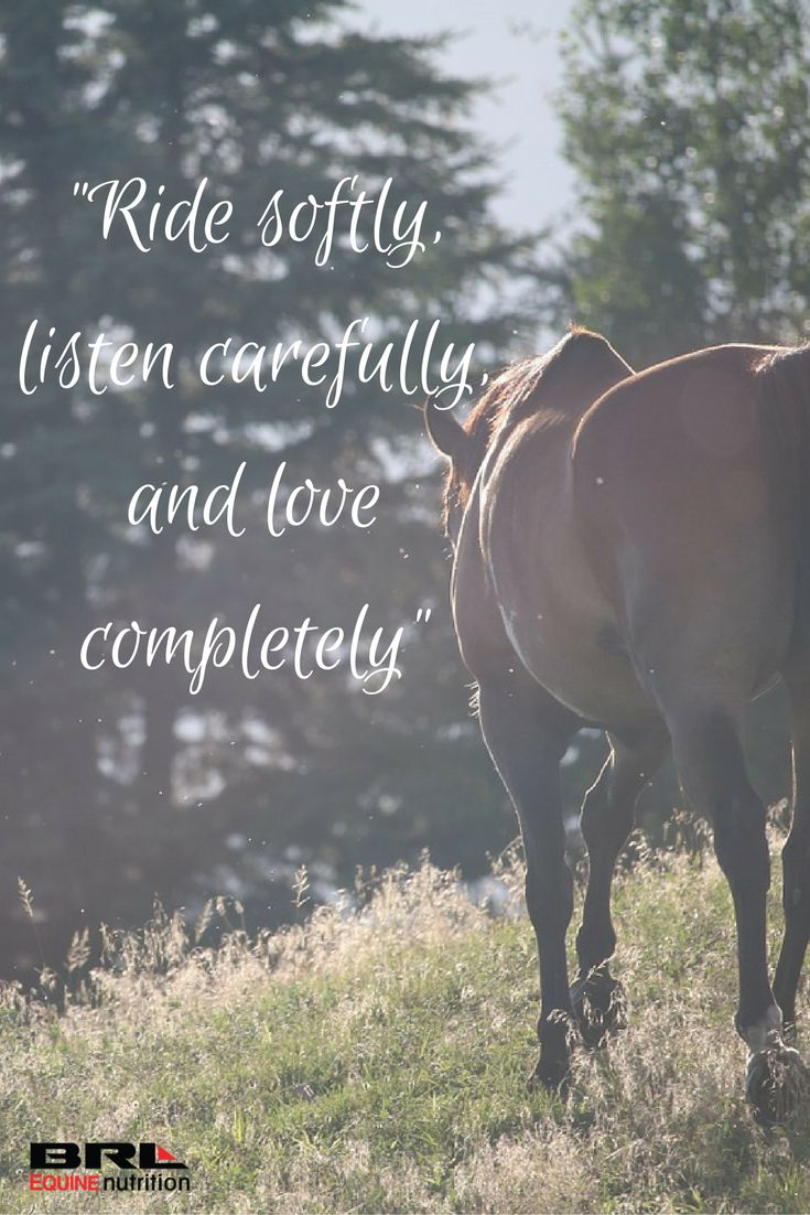 """Ride softly, listen carefully, and love completely"" equestrian horse quote #BRLequinenutrition #BRLequine #loveyourhorse"